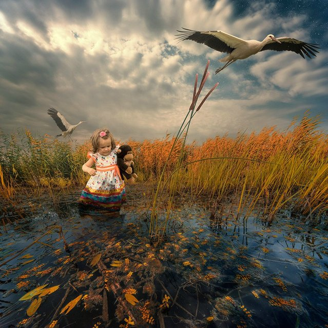 """""""The ground flight"""". (Photo by Ionut Caras)"""