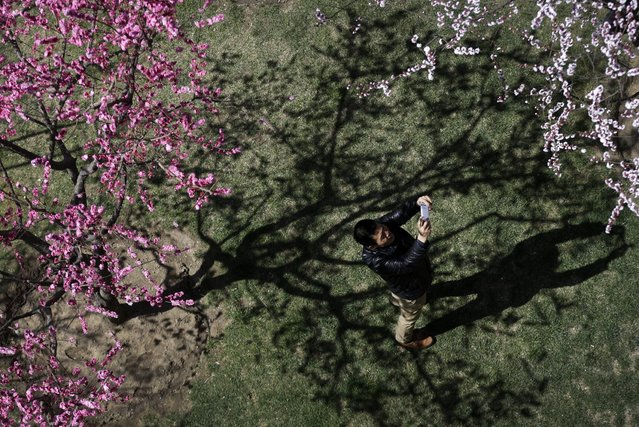 A man uses a smartphone to take a picture of plum blossoms which began blooming at a public park in Beijing Sunday, March 22, 2015. (Photo by Andy Wong/AP Photo)
