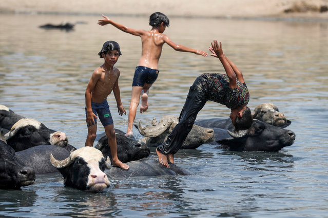 Iraqi boys swim with a herd of buffaloes in the Diyala River in the Faziliah district, east of Baghdad on August 2, 2021, amid extreme summer temperatures. As Iraq bakes under a blistering summer heat wave, its hard-scrabble farmers and herders are battling severe water shortages that are killing their animals, fields and way of life. (Photo by Ahmad Al-Rubaye/AFP Photo)