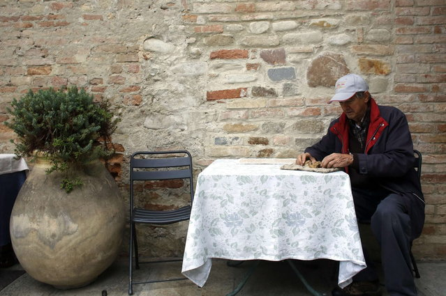 Truffle hunter Ezio Costa, 66, inspects a truffle as he sits outside his restaurant in Monchiero near Alba northwestern Italy, November 9, 2013. (Photo by Stefano Rellandini/Reuters)