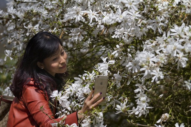 A tourist takes a selfie with her smart phone at Keukenhof, known as the Garden of Europe, a spring park with approximately seven million flower bulbs, in Lisse, Netherlands, Tuesday, April 21, 2015. (Photo by Peter Dejong/AP Photo)