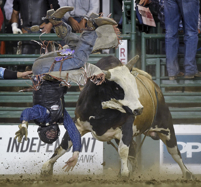 Will Morris of Reno, Nev., get tossed around by Ughly Vinney during the bull riding event at the Reno Rodeo in Reno, Nev., on Thursday, June 25, 2015. (Photo by Andy Barron/Reno Gazette-Journal via AP Photo)