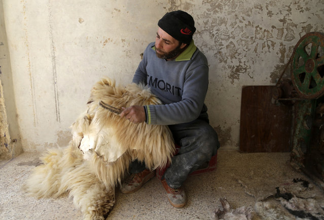 Forty-two-year-old Abu Ali combs sheep skins inside his workshop in Maaret al-Naaman town in Idlib province February 28, 2015. Abu Ali inherited his hundred year old family profession. Having lost his equipment in the country's turmoil, he had to go back to work in primitive ways to produce the wool. (Photo by Khalil Ashawi/Reuters)