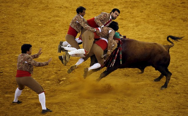 Members of the Chamusca forcados group perform during a bullfight at Campo Pequeno bullring in Lisbon, Portugal August 20, 2015. Forcados are traditional Portuguese bullfighters who catch bulls with their bare hands. (Photo by Rafael Marchante/Reuters)