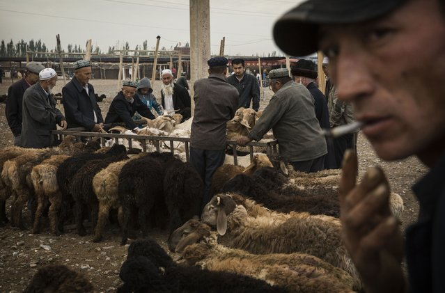 Uyghurs inspect sheep for sale at a livestock market on August 3, 2014 in Kashgar, Xinjiang Province, China. (Photo by Kevin Frayer/Getty Images)