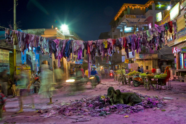 """""""India Holi Festival Cow"""". I traveled to India in March 2014 to partake in their Holi Festival but was discouraged from being in the main gathering area during the height of the energetic celebrations. After the colored dust had settled, I was able to finally explore the streets finding this lone cow nestled comfortably in a pile of torn shirts under a clothesline of more evidence of the days happenings that i missed. (Photo and caption by Cher Takemoto/National Geographic Photo Contest)"""