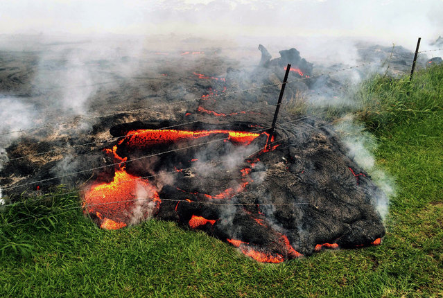 This October 25, 2014 photo provided by the U.S. Geological Survey shows lava flow advancing across the pasture between the Pahoa cemetery and Apa'a Street, engulfing a barbed wire fence, near the town of Pahoa on the Big Island of Hawaii. (Photo by AP Photo/U.S. Geological Survey)