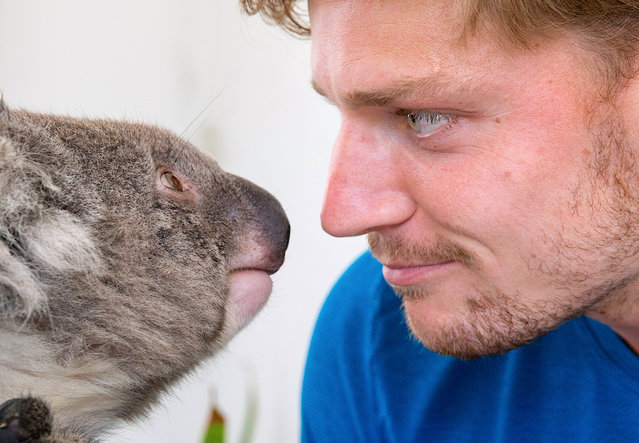 David Goffin of Belgium meets a koala during a promotional event for the Australian Open tennis tournament at Melbourne Park on January 17, 2018. (Photo by Fiona Hamilton/Reuters/Tennis Australia)