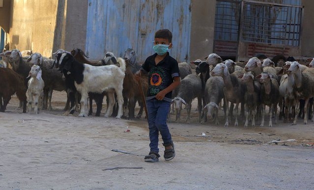 A Palestinian boy grazes sheep while wearing a face mask during a lockdown imposed following the discovery of coronavirus cases in Gaza City , Saturday, September 5, 2020. (Photo by Hatem Moussa/AP Photo)