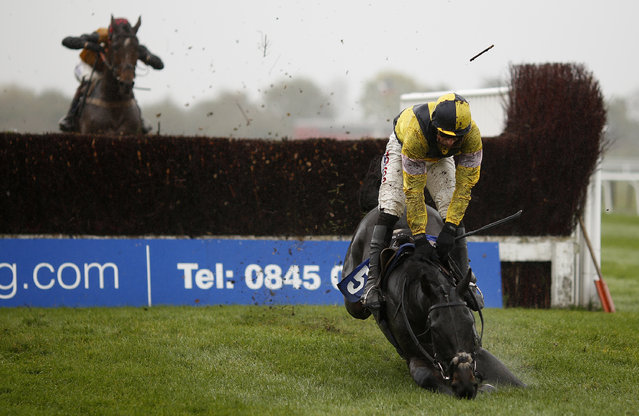 Harry Skelton riding What A Good Night fall at the last with the race at its mercy in The ROA/Racing Post Handicap Steeple Chase at Stratford racecourse on October 29, 2015 in Stratford, England. (Photo by Alan Crowhurst/Getty Images)