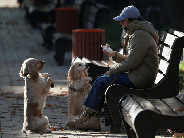 A woman eats a sandwich in a park as her dogs ask her for food on a sunny but cold day in central Kyiv, Ukraine on November 10, 2020. (Photo by Gleb Garanich/Reuters)