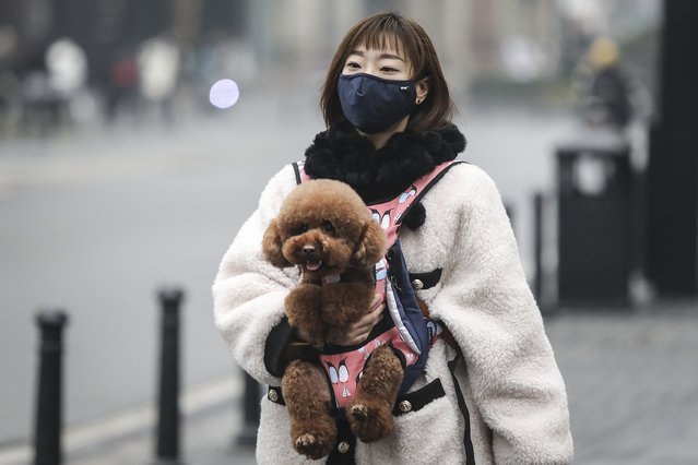 """A woman wears a mask while carrying a dog in the street on January 22, 2020 in Wuhan, Hubei province, China. A new infectious coronavirus known as """"2019-nCoV"""" was discovered in Wuhan as the number of cases rose to over 400 in mainland China. Health officials stepped up efforts to contain the spread of the pneumonia-like disease which medicals experts confirmed can be passed from human to human. The death toll has reached 17 people as the Wuhan government issued regulations today that residents must wear masks in public places. Cases have been reported in other countries including the United States, Thailand, Japan, Taiwan, and South Korea. (Photo by Getty Images/China Stringer Network)"""