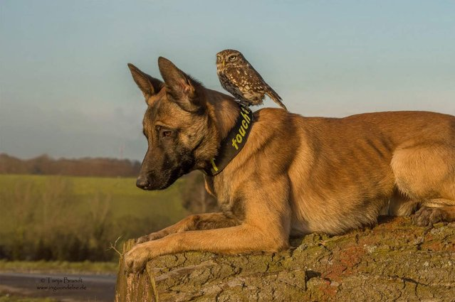 Friendship Of A Dog And An Owl