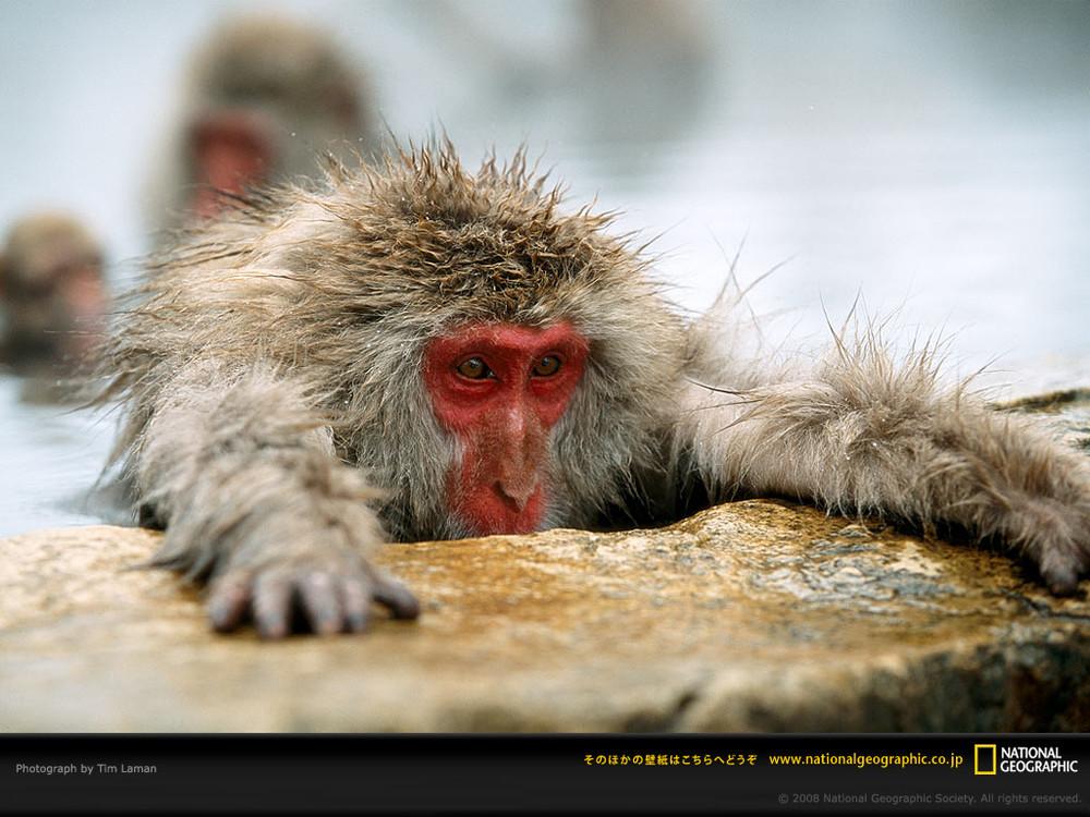 Tim Laman - Wildlife Photojournalist