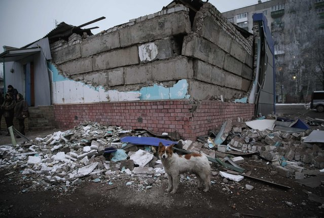 A dog is seen near a destroyed house after today's shelling in Popasna, eastern Ukraine February 15, 2015. (Photo by Gleb Garanich/Reuters)
