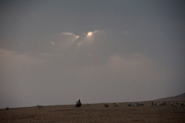 A herder on a motorbike looking after his sheep nearby a large coal mine. Mining development in the region, forcing the displacement of herders,  has lead to large scale protests. (Photo by Gilles Sabrie/The Washington Post)
