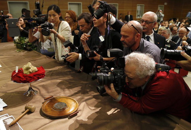 Photographers take pictures of two truffles weighing 950 grams (2.09 pounds) during the World Alba White Truffle Auction in Grinzane Cavour near Alba, in north-western Italy November 10, 2013. The two biggest truffles at the auction sold for 90,000 euros (about $120,000) to a buyer from Hong Kong. (Photo by Stefano Rellandini/Reuters)