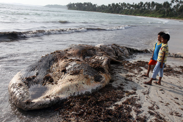 Passersby look over a dead whale shown washed up on shore January 14, 2014 on Bintan Island, Indonesia. The beaching of the unidentified species is a relatively rare occurence for this span of  island shore bordering Singapore and Malaysia. (Photo by Yuli Seperi/Getty Images)