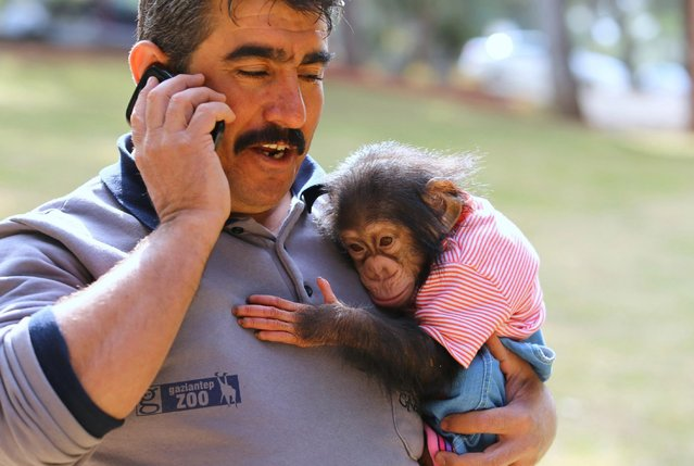 "A caretaker of Gaziantep Zoo Nedim Aslan holds the newborn baby chimpanzee named ""Can"" in his arm, as its mom refused to have him at Gaziantep Zoo, in Gaziantep, Turkey on February 10, 2017. (Photo by Adsiz Gunebakan/Anadolu Agency/Getty Images)"