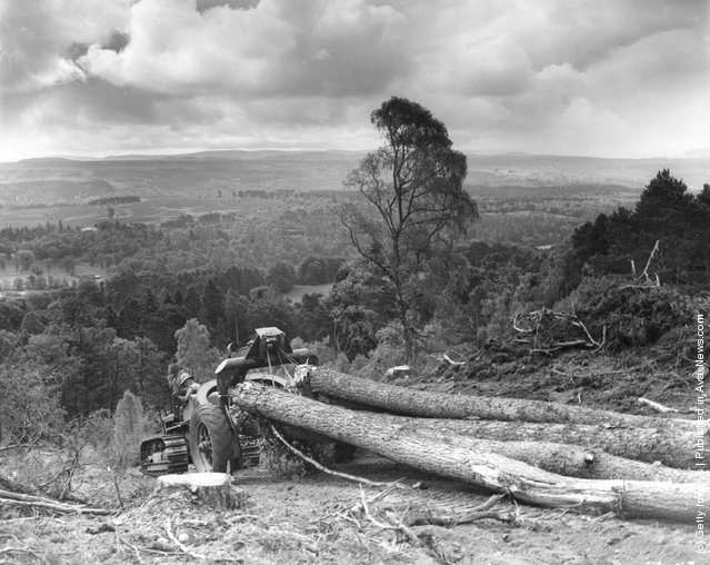 1942: A logging sulky pulls timber down a slipway on the banks of Loch Ness in Scotland