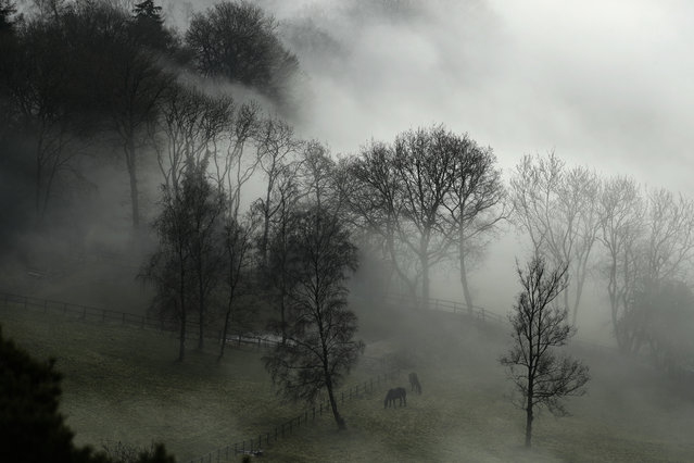 Horses graze in a paddock with fog enveloping the trees behind them, near Leith Hill in Surrey, south west of London, Monday, January 23, 2017. Thick fog has caused numerous flight delays and cancellations at London Heathrow and other area airports. The Met Office issued a severe weather warning for London and most of southern England as driving conditions were also hazardous and slippery. (Photo by Matt Dunham/AP Photo)