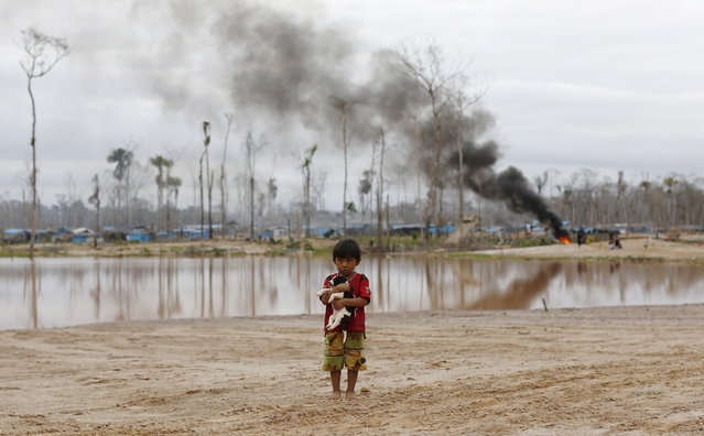 A boy carries a dog as he stands after a Peruvian police operation to destroy illegal gold mining camps in a zone known as Mega 14, in the southern Amazon region of Madre de Dios July 14, 2015. Peruvian police razed dozens of illegal gold mining camps at the edge of an Amazonian nature reserve this week, part of a renewed bid to halt the spread of wildcatting in a remote rainforest region. (Photo by Janine Costa/Reuters)