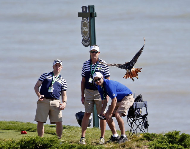 Marshals watch as a bird flies near the 8th tee during a practice round for the PGA Championship golf tournament Wednesday, August 12, 2015, at Whistling Straits in Haven, Wis. (Photo by Julio Cortez/AP Photo)