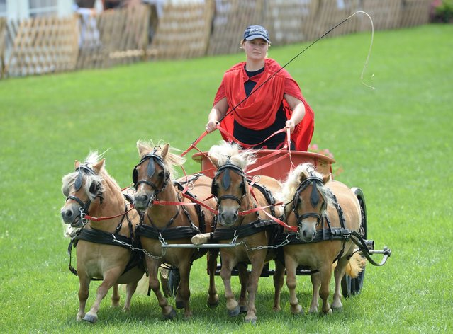 """A Roman dyad carriage with four Mini Shetland Ponys participates in a race at the horse fair """"Eurocheval"""" in Offenburg, Germany, 23 July 2014. The Eurocheval is one of the biggest horse fairs in Europe, according to the organizer. (Photo by Patrick Seeger/EPA)"""