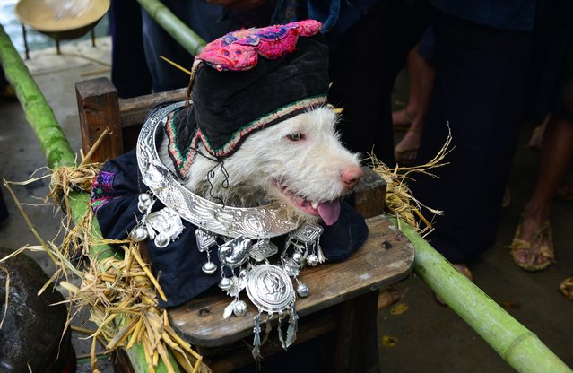 "On Saturday, September 2, 2017, local Chinese villagers gathered to celebrate a folk festival parade known as ""Dog carrying Day"" in Jiaobang village, Gedong Town, Jianhe county, Qiandongnan Miao and Dong Autonomous Prefecture, southwest China's Guizhou province. (Photo by Imaginechina/Rex Features/Shutterstock)"