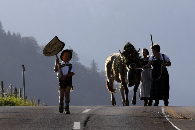 Bavarian herdswomen in traditional dresses drive a cow on a road during the return of the cattle from the summer pastures in the mountains in Oberstaufen, Germany, Friday, September 9, 2016. (Photo by Matthias Schrader/AP Photo)