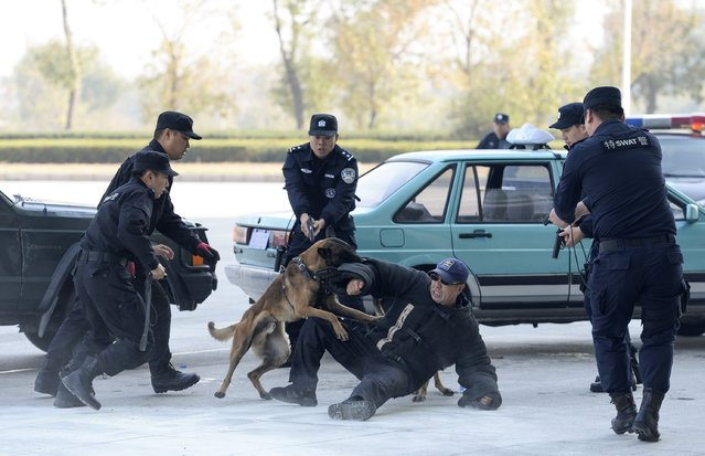 Special Weapons and Tactics (SWAT) team members conduct a mock arrest with the aid of a police dog during an APEC Summit security drill in Tianjin municipality, November 4, 2014. (Photo by Reuters/Stringer)