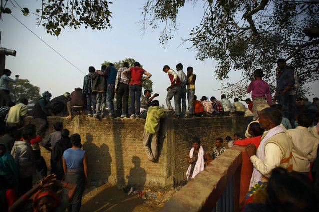 """People climb on the walls of the enclosure for buffalos awaiting sacrifice on the eve of the sacrificial ceremony for the """"Gadhimai Mela"""" festival in Bariyapur November 27, 2014. (Photo by Navesh Chitrakar/Reuters)"""