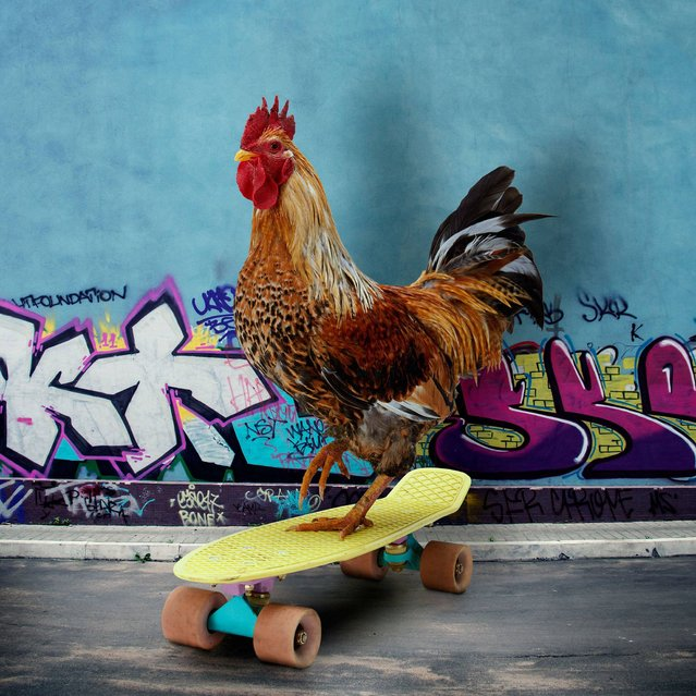 """Nice Pecks"" calendar: Skateboarding. (Photo by The happy egg co.)"