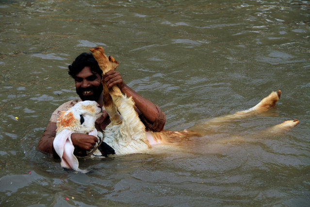 A man plays with his pet goat while taking a bath to cool off in a canal during hot and humid weather in Lahore, Pakistan May 30, 2018. (Photo by Mohsin Raza/Reuters)