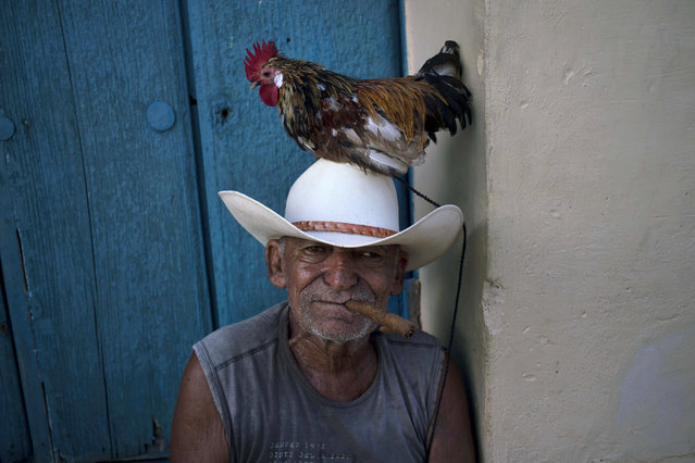 Jose poses with his rooster named Luis to be photographed for tourists in Trinidad, Cuba, Sunday, October 11, 2015. (Photo by Ramon Espinosa/AP Photo)