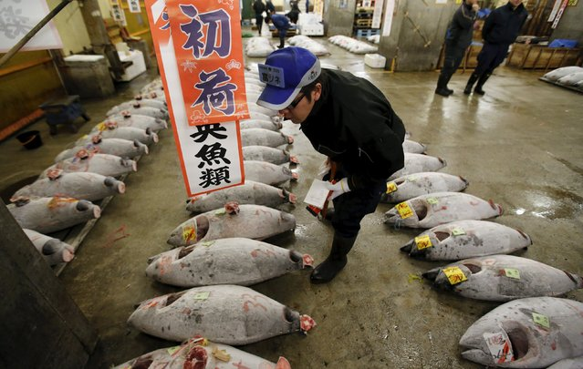 A wholesaler checks the quality of frozen tuna displayed at the Tsukiji fish market before the New Year's auction in Tokyo, Japan, January 5, 2016. (Photo by Toru Hanai/Reuters)
