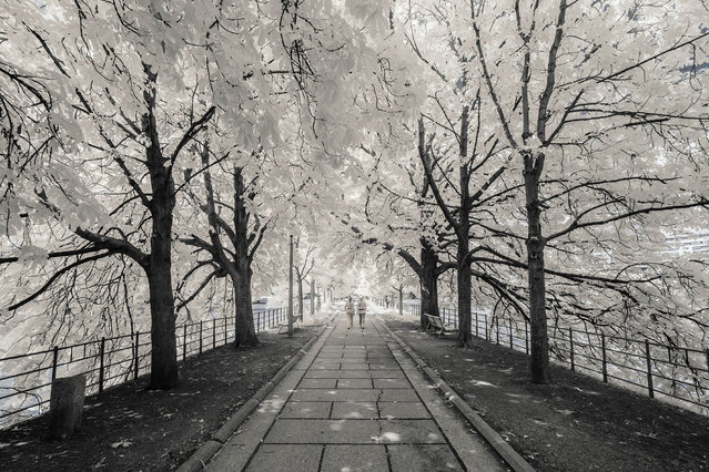 """He added, """"Infrared photography can easily offer attractive pictures, but it does not mean they are interesting"""". (Photo by Pierre-Louis Ferrer/Caters News Agency)"""
