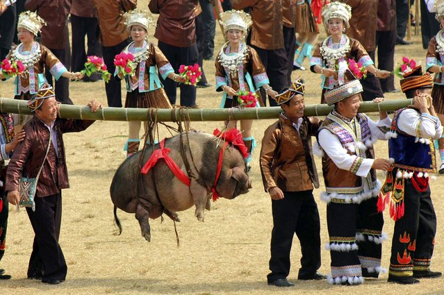 "Ethnic Miao people carry a pig at a traditional local social party called ""Datongnian"" in Rongshui county, Liuzhou, Guangxi ethnic Zhuang autonomous region, China, on Oktober 26, 2013. (Photo by Reuters/China Daily)"