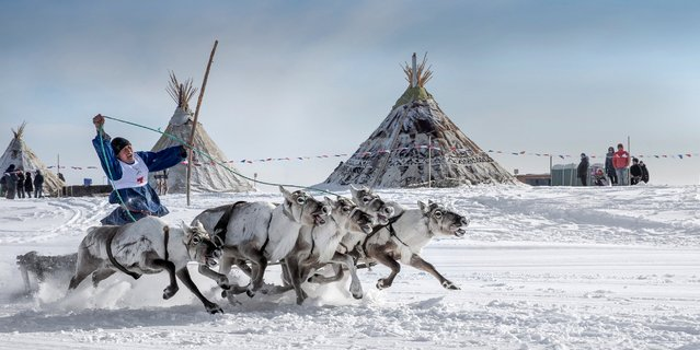 A Nenets rides a sled during a reindeer race on the Reindeer Herders' Day in Nadym, near Moscow, Russia, March 28, 2016. For the indigenous nomadic Nenets people, Reindeer Herders' Day offers a chance to show their prowess in wrestling, high jumps and other traditional local sports in reindeer races. (Photo by Sergey Anisimov/Getty Images/Anadolu Agency)