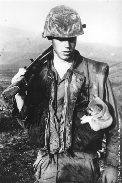 A soldier of the US Seventh Marines carrying a little puppy in his pocket after rescuing it during an operation south west of Da Nang in Vietnam, 1968