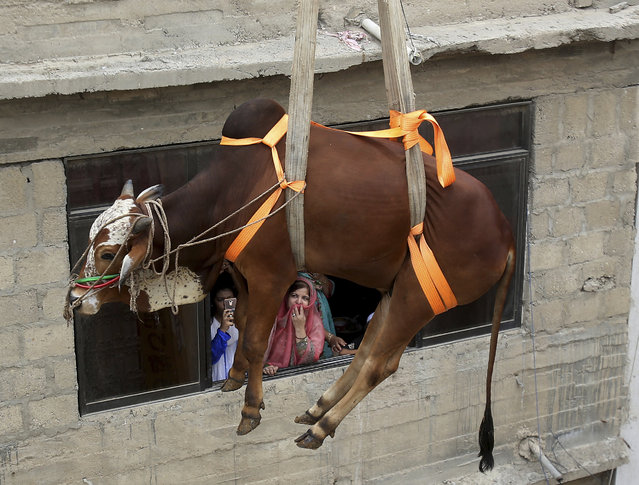 People look as a bull is brought down from the rooftop of a three-story house with a crane, to be sold for the upcoming Muslim Eid al-Adha holiday, in Karachi, Pakistan, Sunday, August 4, 2019. Eid al-Adha, or Feast of Sacrifice, this most important Islamic holiday marks the willingness of the Prophet Ibrahim (Abraham to Christians and Jews) to sacrifice his son. During the holiday, which in most places lasts four days, Muslims slaughter sheep or cattle, distribute part of the meat to the poor and eat the rest. (Photo by Fareed Khan/AP Photo)