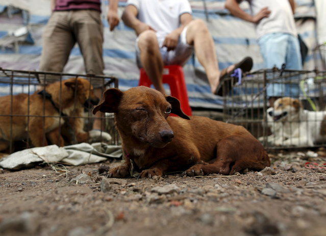 Dogs for sale are seen in Dashichang dog market in Yulin, Guangxi Autonomous Region, June 21, 2015. (Photo by Kim Kyung-Hoon/Reuters)