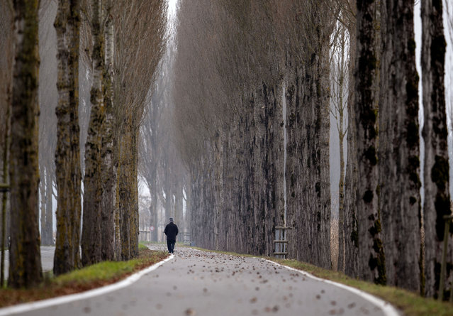 A man walks between trees on the Reichenau island near Constance, Germany, Thursday, December 5, 2019. (Photo by Michael Probst/AP Photo)