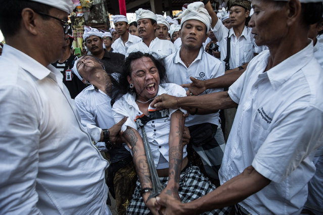 """A Balinese man is in state of trance stabs his chest with a short sacred ceremonial dagger called """"keris"""" during a sacred ritual of Ngerebong at Petilan Temple on August 2, 2015 in Denpasar, Bali, Indonesia. This traditional ritual is said to achieve harmony between humans, nature and God. The event signifies the anniversary of the royal temple of the kingdom of Kesiman in East Denpasar, Pura Dalem Petilan Pengerebongan Kesiman. (Photo by Agung Parameswara/Getty Images)"""