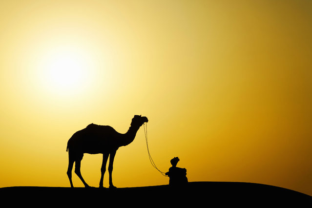 A Camel and camel driver silhouetted at sunset in the Thar Desert, Jodhpur, India. (Photo by Adam Jones/Dantia Delimont/Caters News/Ardea)