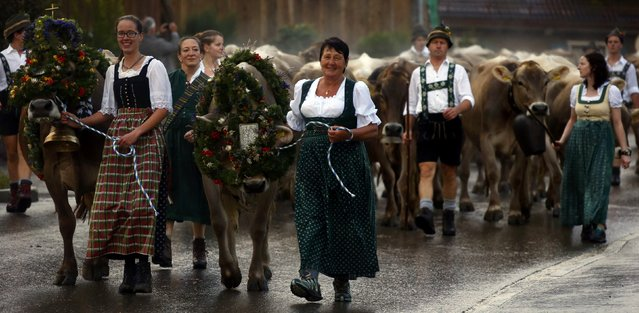 "Bavarian farmers escort cows during the traditional ""Almabtrieb"" in Oberstaufen, about 180km (110 miles) south of Munich, Germany, September 11, 2015. (Photo by Michael Dalder/Reuters)"