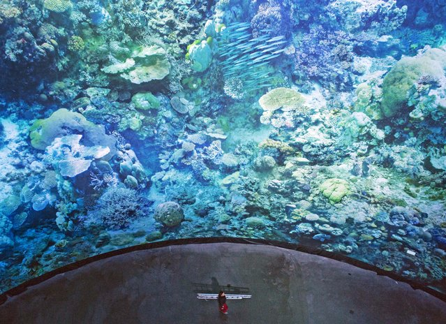 A worker walks in front of the monumental panoramic artwork 'Great Barrier Reef', which is printed on cloth widths, of artist Yadegar Asisi during a press preview at the Leipzig Asisi Panometer in Leipzig, central Germany, Friday, October 2, 2015. On a 1:1 scale, the panorama presents the unique underwater world of the coral reef off the coast of Australia in all its fragile beauty and complexity. The exhibition opens for visitors on Oct. 3, 2015. (Photo by Jens Meyer/AP Photo)