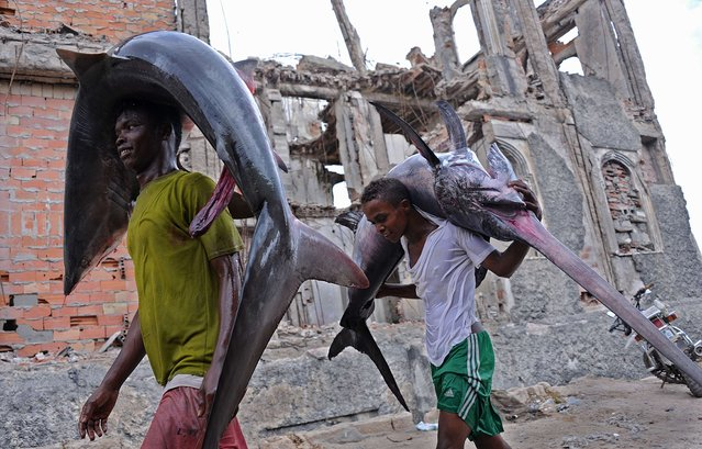 Porters carry the carcasses of a shark (L) and a Marlin (R) to the local market in Hamarweyne near the port of Mogadishu on the Indian Ocean coast on November 18, 2014 in the Somalia capital as fishermen bring in their catch. (Photo by Mohamed Abdiwahab/AFP Photo)