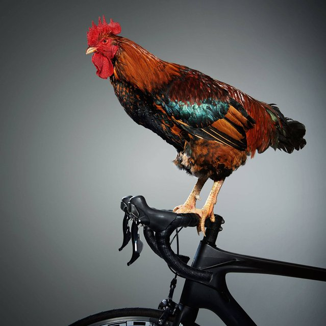 """Nice Pecks"" calendar: Cycling. (Photo by The happy egg co.)"