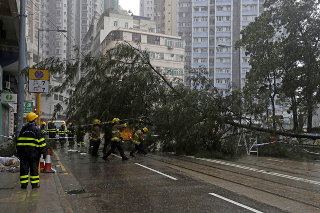 Firemen remove the tree branches broken by strong winds caused by Typhoon Haima in Hong Kong, Friday, October 21, 2016. (Photo by Kin Cheung/AP Photo)